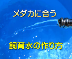 メダカを飼育するための水の作り方